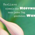 Beitragsbild - Verliere niemals die Hoffnung, denn jeden Tag geschehen Wunder