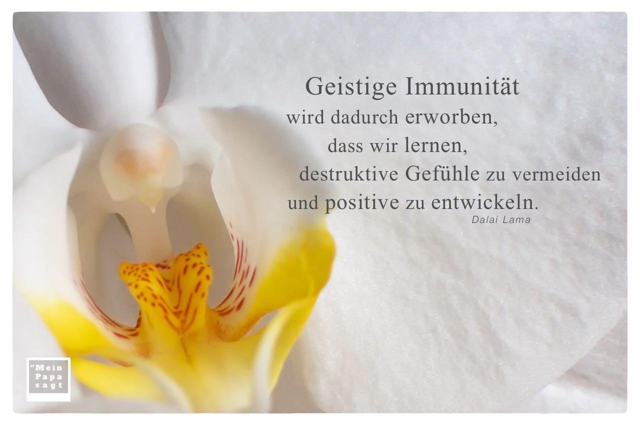 Orchidee mit Dalai Lama Zitate mit Bild: Geistige Immunität wird dadurch erworben, dass wir lernen, destruktive Gefühle zu vermeiden und positive zu entwickeln. Dalai Lama