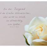 Rose mit Heine Zitate Bilder: In der Jugend ist die Liebe stürmischer, aber nicht so stark, so allmächtig, wie später. Heinrich Heine