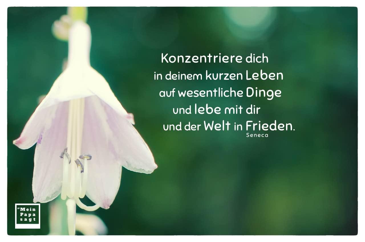 Blütenkelch mit Seneca Zitate Bilder: Konzentriere dich in deinem kurzen Leben auf wesentliche Dinge und lebe mit dir und der Welt in Frieden. Seneca