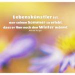 Blumen mit Polgar Zitate Bilder: Lebenskünstler ist, wer seinen Sommer so erlebt, dass er ihm noch den Winter wärmt. Alfred Polgar