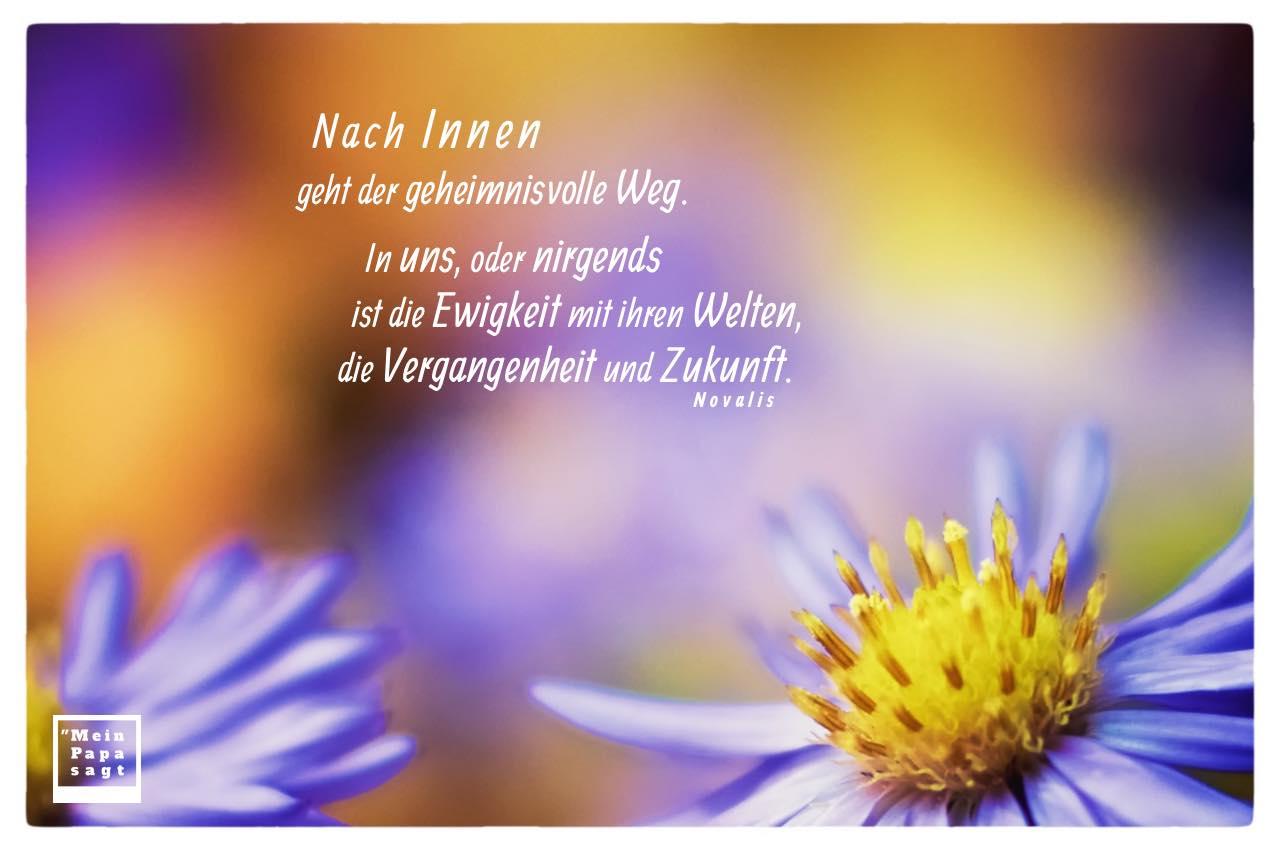 Blumen mit Novalis Zitate Bilder: Nach Innen geht der geheimnisvolle Weg. In uns, oder nirgends ist die Ewigkeit mit ihren Welten, die Vergangenheit und Zukunft. Novalis