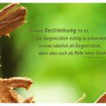 Totholz und Grün mit Hesse Zitate Bilder: Unsere Bestimmung ist es, die Gegensätze richtig zu erkennen, erstens nämlich als Gegensätze, dann aber auch als Pole einer Einheit. Hermann Hesse
