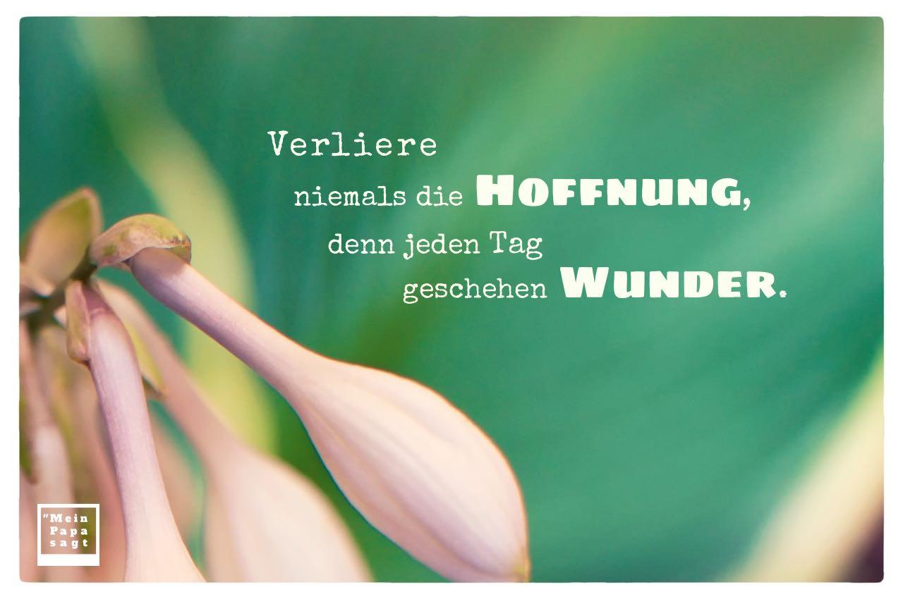 Blüten mit Sprüche Bilder: Verliere niemals die Hoffnung, denn jeden Tag geschehen Wunder.