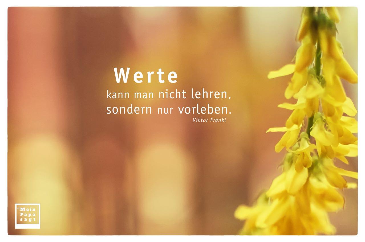 Forsythie mit Frankl Zitate mit Bild: Werte kann man nicht lehren, sondern nur vorleben. Viktor Frankl