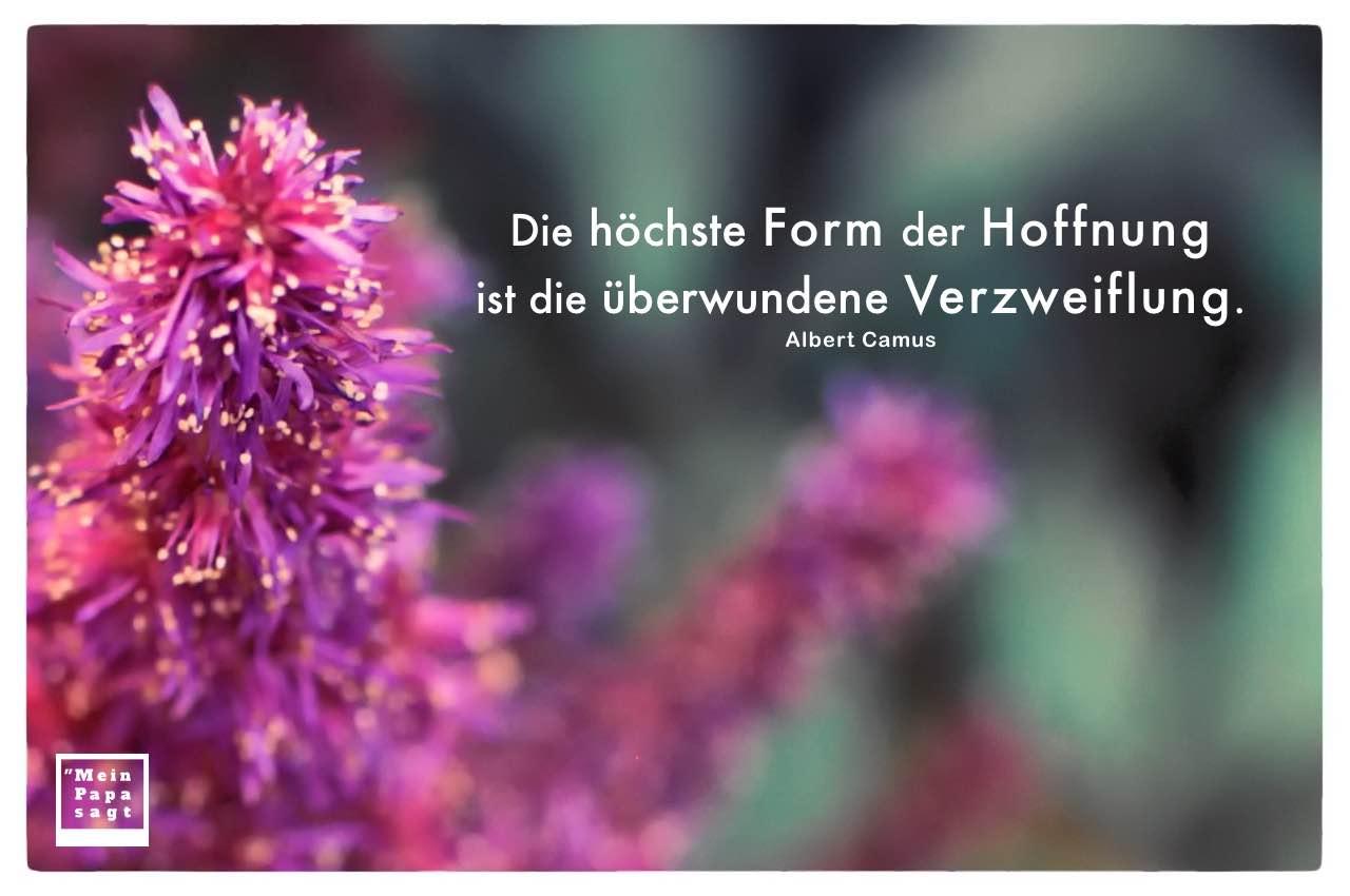 Blüten mit Camus Zitate Bilder: Die höchste Form der Hoffnung ist die überwundene Verzweiflung. Albert Camus