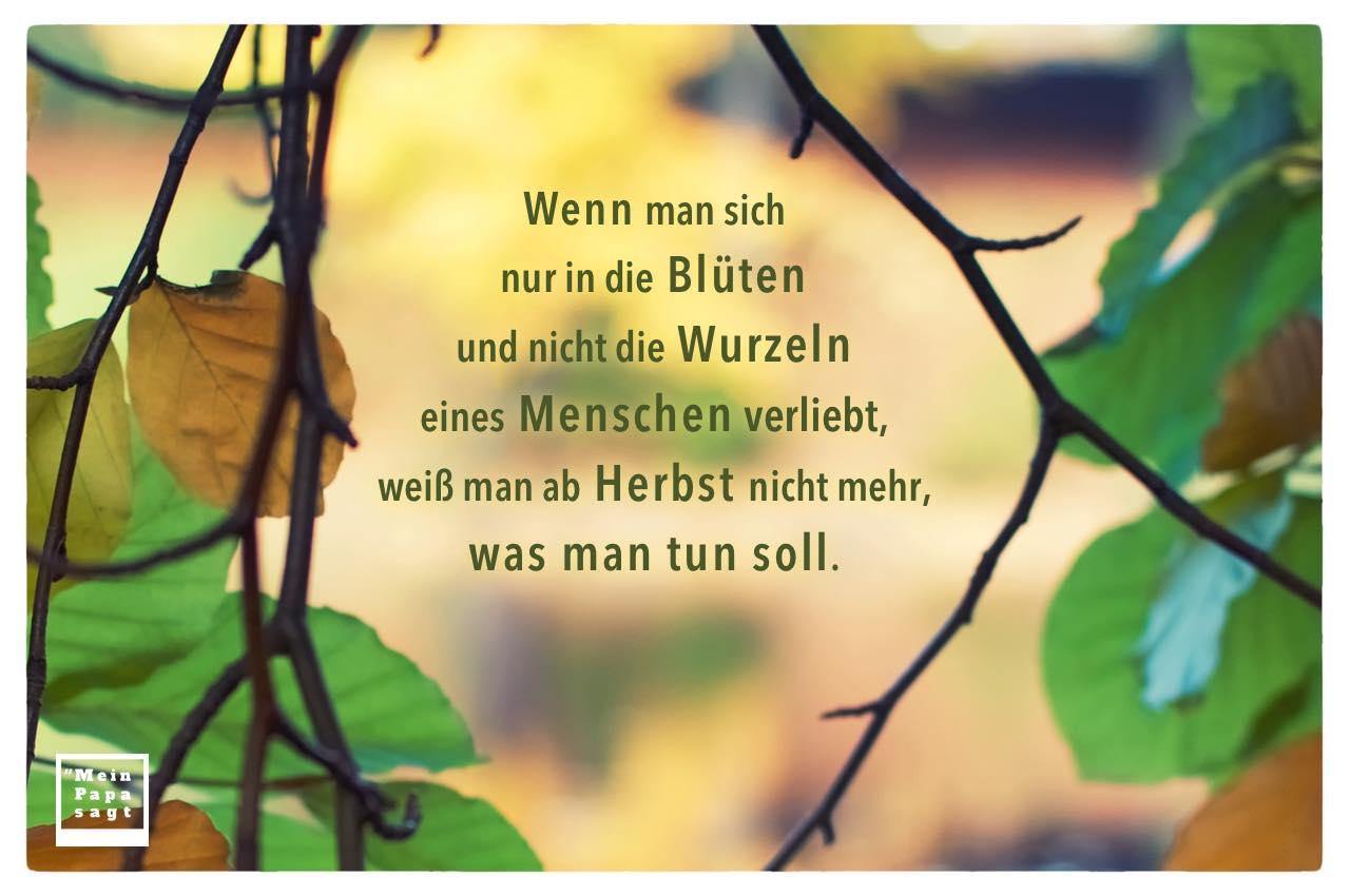 Herbst Wald mit Herbst Sprüche Bilder: Wenn man sich nur in die Blüten und nicht die Wurzeln eines Menschen verliebt, weiß man ab Herbst nicht mehr, was man tun soll.