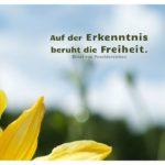 Blumen vor blauem Himmel mit von Feuchtersleben Zitate Bilder: Auf der Erkenntnis beruht die Freiheit. Ernst von Feuchtersleben