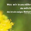Was wir in uns nähren, das wächst; das ist ein ewiges Naturgesetz - Johann Wolfgang von Goethe