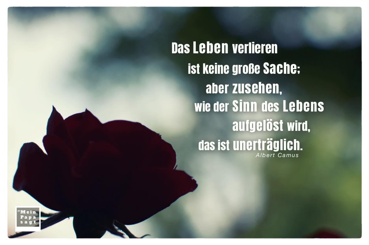 Rose im Schatten mit Camus Zitate Bilder: Das Leben verlieren ist keine große Sache; aber zusehen, wie der Sinn des Lebens aufgelöst wird, das ist unerträglich. Albert Camus