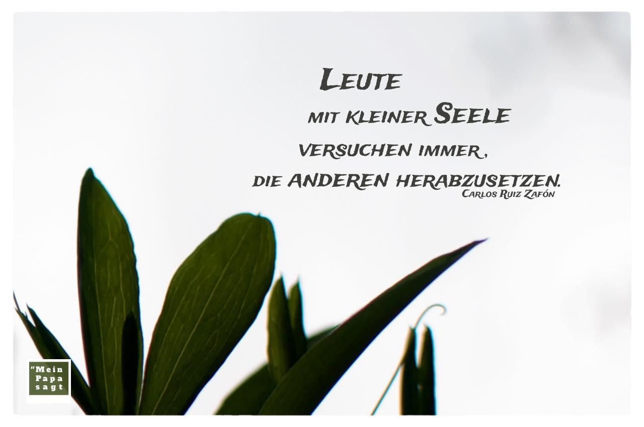 Dunkelgrüne Blätter mit Zafón Zitate Bilder: Leute mit kleiner Seele versuchen immer, die anderen herabzusetzen. Carlos Ruiz Zafón