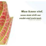 Laub mit Humboldt Zitate Bilder: Man kann viel, wenn man sich nur recht viel zutraut. Wilhelm von Humboldt