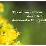 Blüte Baum mit Goethe Zitate Bilder: Was wir in uns nähren, das wächst; das ist ein ewiges Naturgesetz. Johann Wolfgang von Goethe