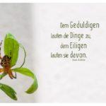 Spinne auf grünen Blättern mit dem asiatischen Sprichwort: Dem Geduldigen laufen die Dinge zu, dem Eiligen laufen sie davon. Aus Asien