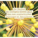 Pflanzen Stengel mit Shaw Zitate Bilder: Der Nachteil der Intelligenz besteht darin, dass man ununterbrochen gezwungen ist, dazuzulernen. George Bernard Shaw