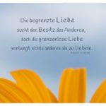 Blütenblätter mit Gibran Zitate Bilder: Die begrenzte Liebe sucht den Besitz des Anderen, doch die grenzenlose Liebe verlangt nichts anderes als zu lieben. Khalil Gibran