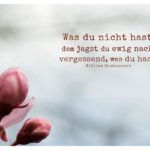 Mandelblüte mit Shakespeare Zitate Bilder: Was du nicht hast, dem jagst du ewig nach, vergessend, was du hast. William Shakespeare