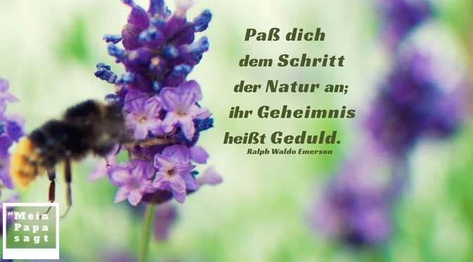 Paß dich dem Schritt der Natur an; ihr Geheimnis heißt Geduld – Ralph Waldo Emerson
