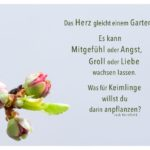 Junge Triebe mit Kornfield Zitate Bilder: Das Herz gleicht einem Garten. Es kann Mitgefühl oder Angst, Groll oder Liebe wachsen lassen. Was für Keimlinge willst du darin anpflanzen? Jack Kornfield