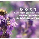 Biene auf Lavendel mit von Bingen Zitate Bilder: Gott kann nicht geschaut werden, sondern wird durch die Schöpfung erkannt. Hildegard von Bingen