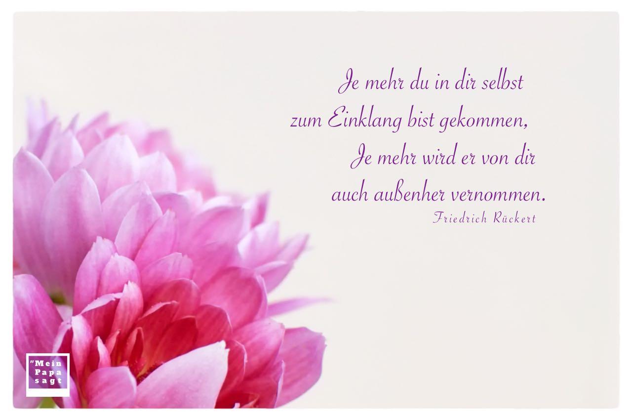 Blütenkelche mit Rückert Zitate Bilder: Je mehr du in dir selbst zum Einklang bist gekommen, Je mehr wird er von dir auch außenher vernommen. Friedrich Rückert