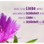 Blüten & Pflanzen mit Aurelius Zitate Bilder: Soviel in dir Liebe wächst, soviel wächst die Schönheit in dir. Denn die Liebe ist die Schönheit der Seele. Augustinus Aurelius