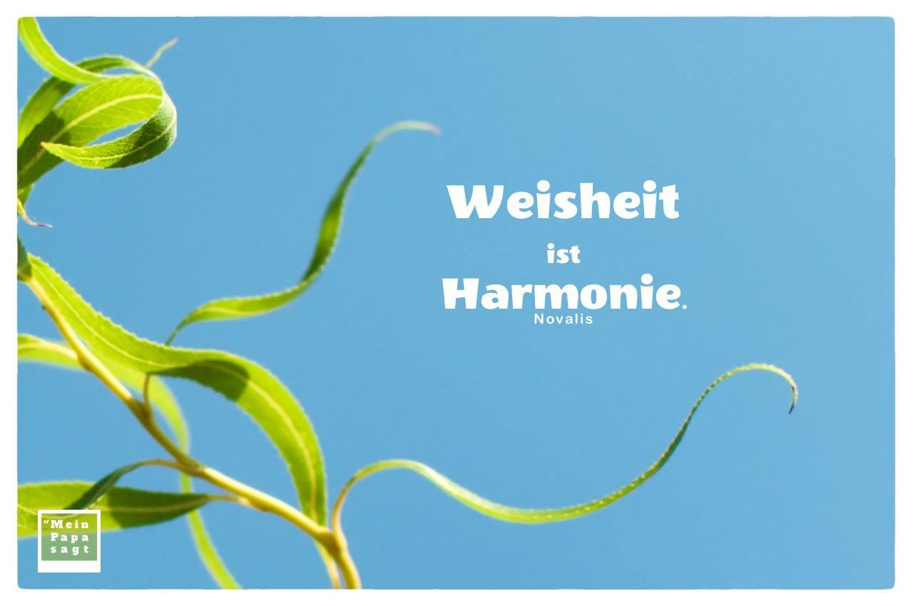 Weidenblätter mit Mein Papa sagt Novalis Zitate Bilder: Weisheit ist Harmonie. Novalis