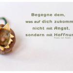 vertrocknete Alpenveilchen Knospe mit Mein Papa sagt von Sales Zitate Bilder: Begegne dem, was auf dich zukommt, nicht mit Angst, sondern mit Hoffnung. Franz von Sales