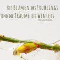 Beitragsbild - Die Blumen des Frühlings sind die Träume des Winters