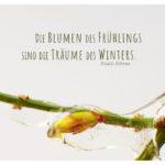 Winterjasmin im Eismantel mit Mein Papa sagt Gibran Zitate Bilder: Die Blumen des Frühlings sind die Träume des Winters. Khalil Gibran